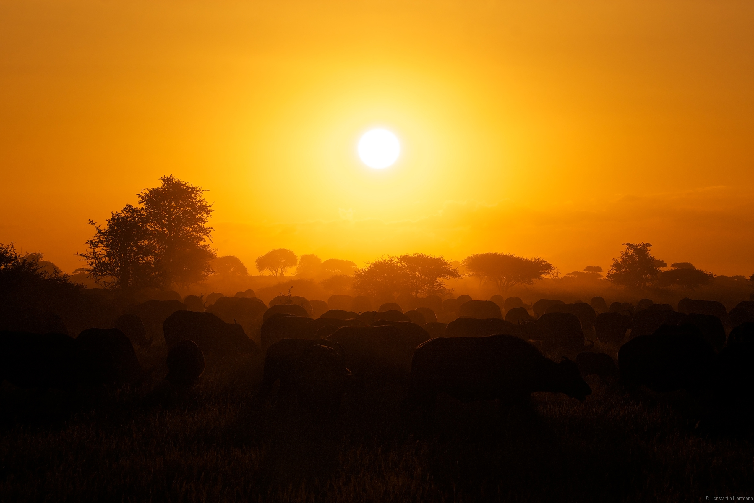 buffalosunset